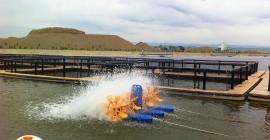 Aerator apa cu 4 pedale in functionare