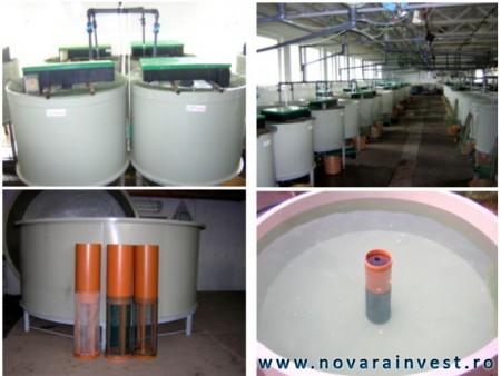 Bazine din polipropilena pentru crestere si precrestere