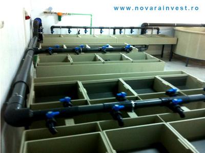 Incubarea icrelor cu ajutorul unui incubator de icre