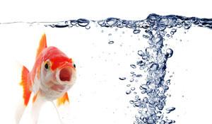 Oxigenarea aerarea apei pentru piscicultura