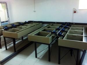 Sistem de reproduce cu incubatie